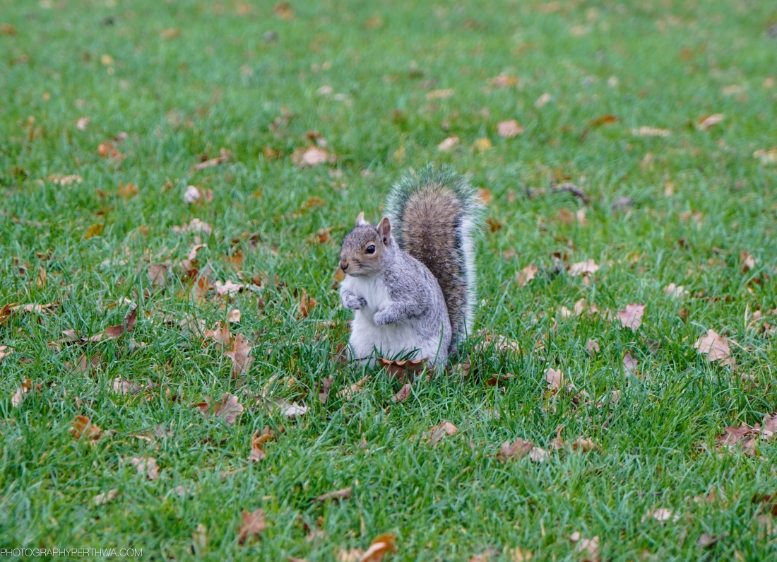 Crysal Palace Squirrel
