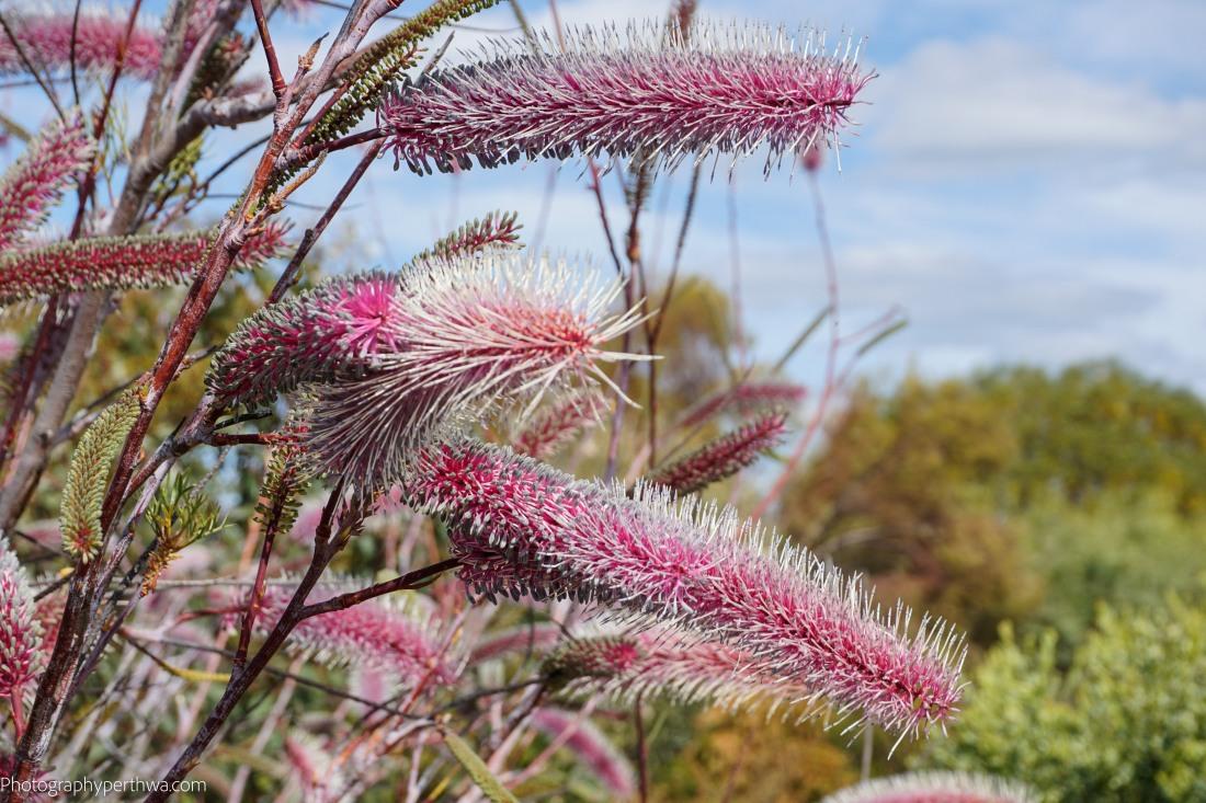 bushland-garden-flower-1-of-1
