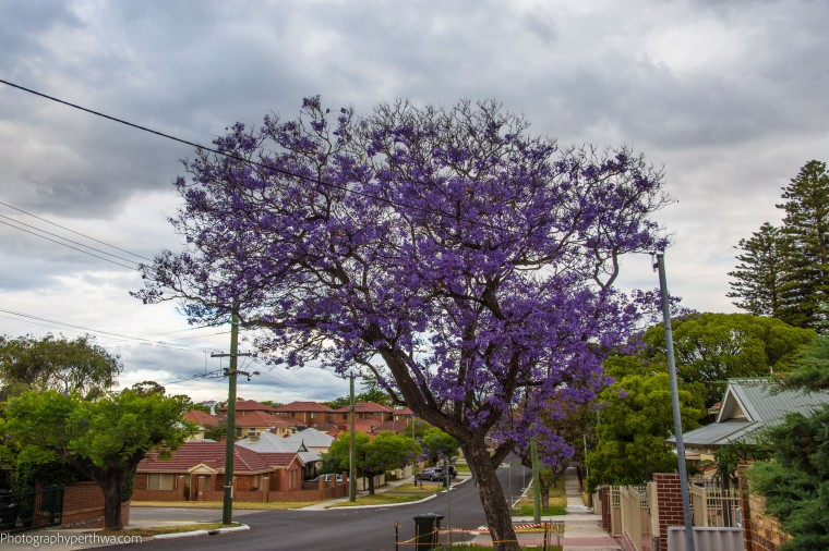 cape-lilac5-street-view-1-of-1