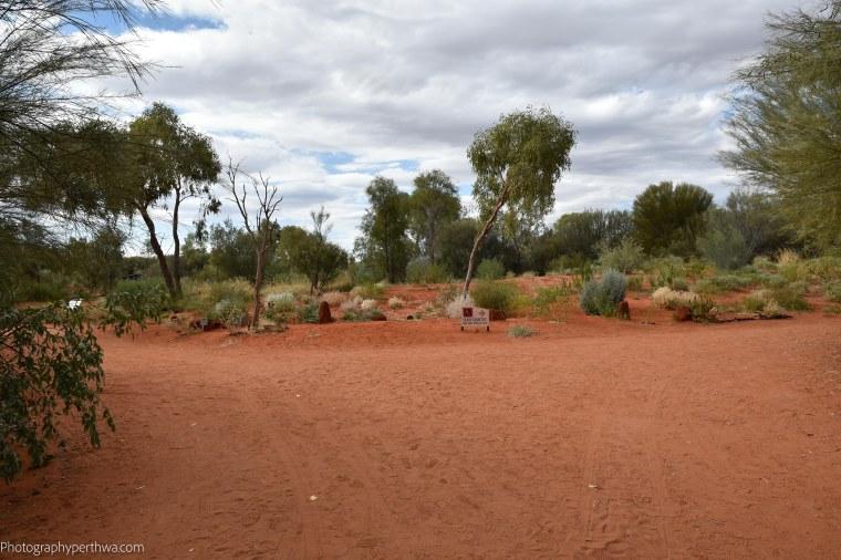 Alice Springs Desert Park - desert sands (1 of 1)