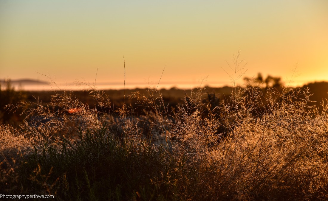 Ranges Rest Area - sunrise on plants better (1 of 1)