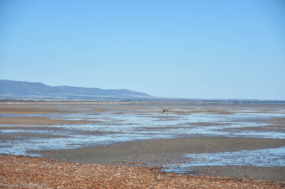 tide out at Port Germein (1 of 1)