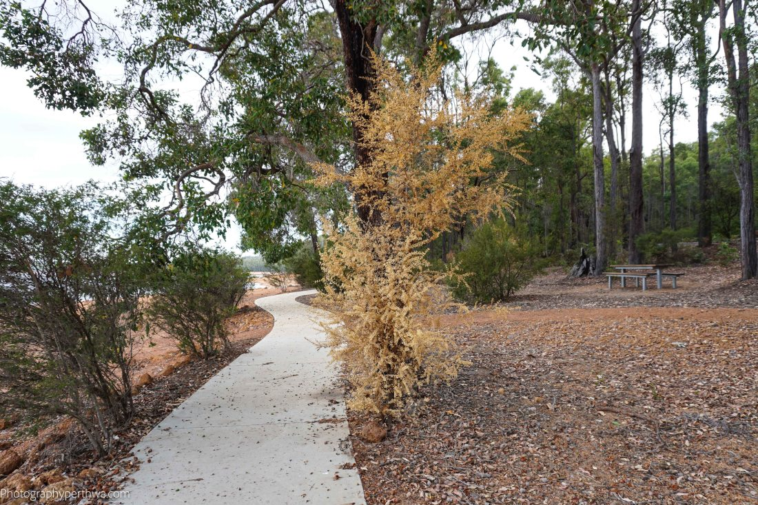 Potters Gorge paved path (1 of 1)