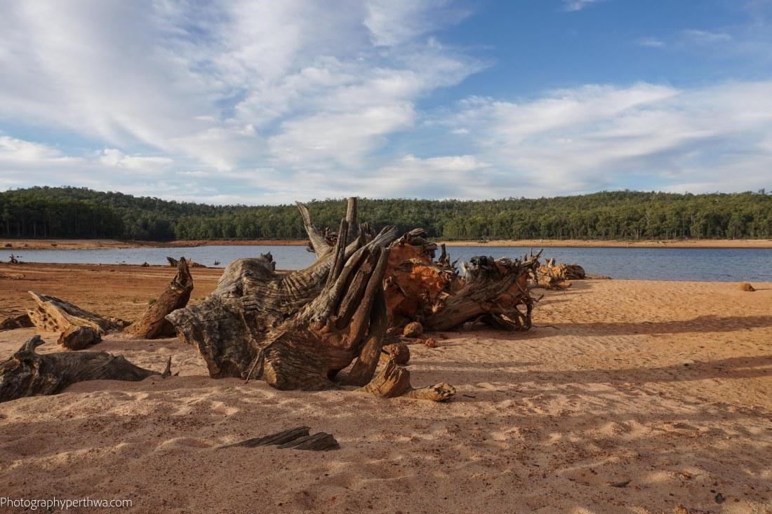tree stumps (1 of 1)
